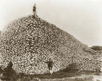 bison_skull_pile_ca18701